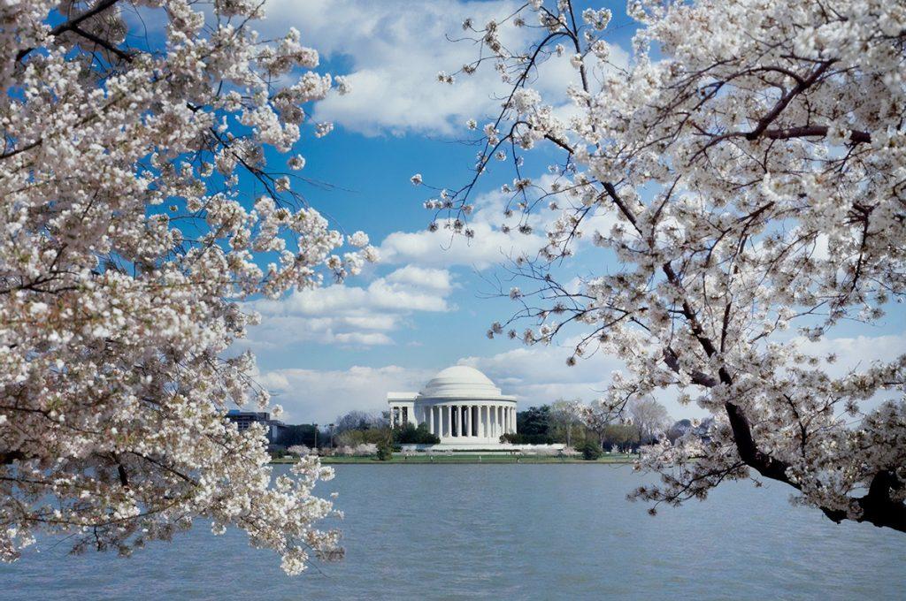 外国での桜の花言葉