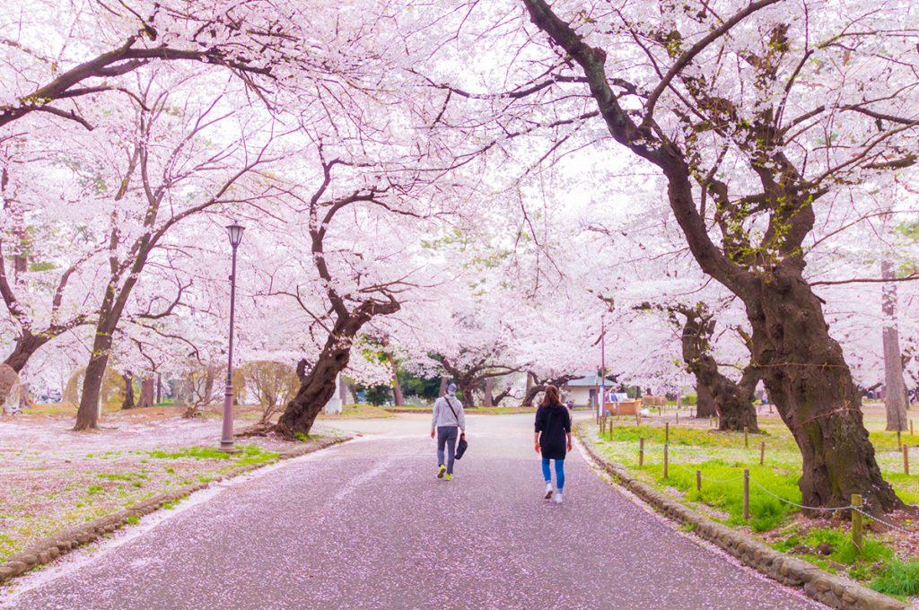 お花見の主役が桜になった理由