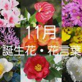 【11月の誕生花一覧】ギフトにぴったりな花言葉も紹介