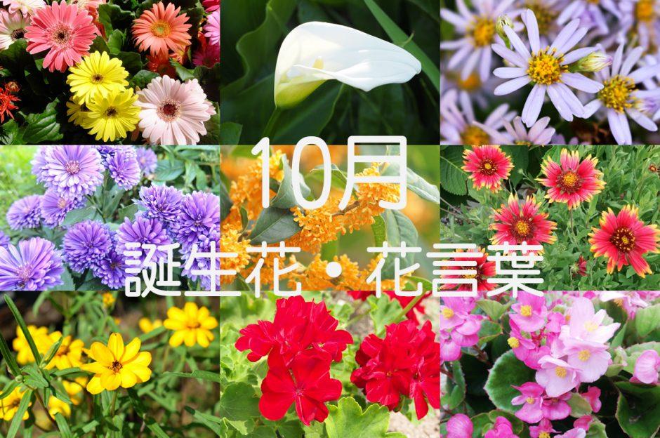 【10月の誕生花一覧】ギフトにぴったりな花言葉も紹介