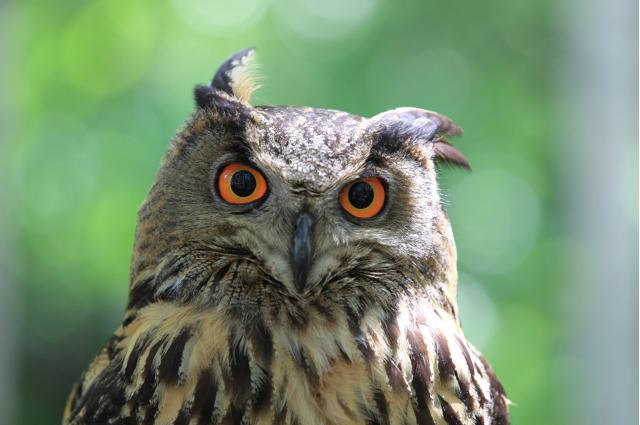 ふくろうは「縁起が悪い鳥」とも言われる理由
